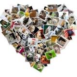 קולאז' תמונות בצורת לב